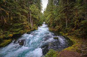 Картинка Штаты Речка Камни Лес Мох Mackenzie River, Oregon Природа