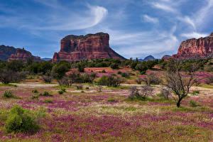 Фотографии Америка Весенние Скалы Деревья Sedona, Arizona Природа