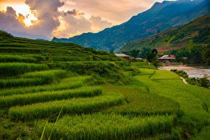 Фотография Вьетнам Гора Поля Облачно Sapa Природа