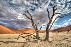 Обои Африка Небо Дерево Песок Облако HDRI Namib Naukluft Park, Deadvlei, Namibia Природа