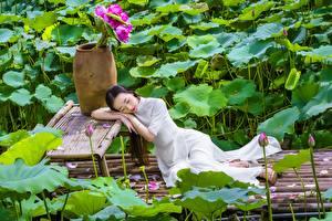 Фотографии Азиатки Лотос Брюнетки Платья девушка