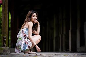 Фотография Азиаты Сидящие Взгляд Шатенка молодые женщины