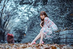 Фотографии Осенние Азиаты Размытый фон Шатенка Платья Сидящие молодая женщина
