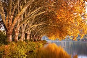 Картинка Осенние Река Дерево Отражении Ветвь