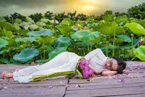 Картинки Букет Азиатки Лотос Брюнетки Очков Лежа Платье Спит Девушки