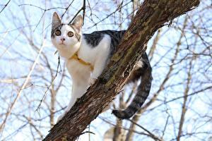 Фото Коты Ветка Взгляд