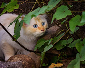 Фотография Кот Смотрит Животные