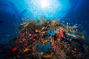 Фото Кораллы Подводный мир Рыбы