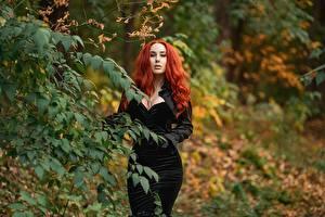 Обои для рабочего стола Georgiy Dyakov На ветке Платье Рыжих Вырез на платье Смотрят Боке молодая женщина