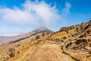 Обои Индия Горы Дерево Тропинка Облако Singalila National Park, West Bengal