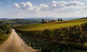 Фотография Италия Дороги Виноградник Тоскана