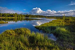 Фотографии Озеро Россия Траве Yugra, Tyumen Oblast Природа