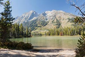 Обои Гора Лес Парк Штаты Grand Teton National Park, Wyoming