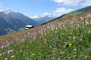 Картинка Гора Швейцария Луга Трава Grisons