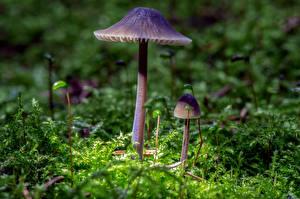 Фотографии Грибы Мох Боке Природа