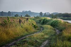 Фотографии Дороги Лето Утро Трава Природа