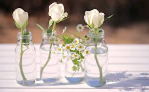 Обои Розы Ромашки Бутылка Три Белая цветок