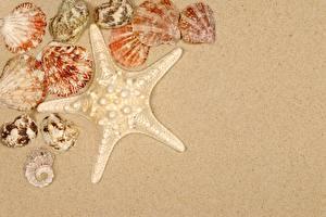 Обои Морские звезды Ракушки Песке Шаблон поздравительной открытки