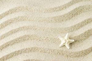 Картинки Морские звезды Текстура Песка