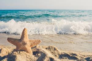 Картинка Лето Море Волны Морские звезды Песка Боке Природа