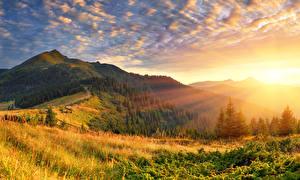 Фото Рассветы и закаты Леса Пейзаж Трава Лучи света Холм