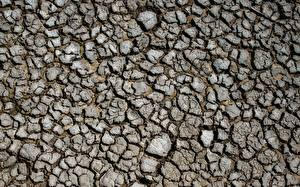 Фотографии Текстура Земли Сухие