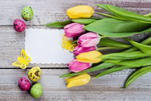 Картинки Тюльпан Пасха Шаблон поздравительной открытки Яйца Доски Цветы