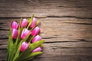 Фотография Тюльпаны Розовая Шаблон поздравительной открытки цветок