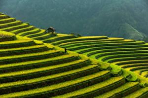 Обои Вьетнам Горы Поля Mu Cang Chai, rice terraces Природа картинки