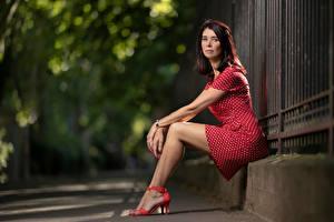 Обои Женщина Шатенки Сидящие Ноги Платье Смотрит Боке Christel