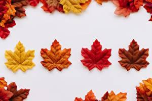 Фотографии Осенние Клёна Шаблон поздравительной открытки Листва Природа