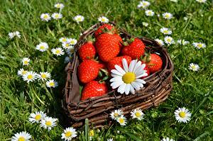 Картинки Ягоды Ромашка Клубника Трава Корзинка Серце цветок