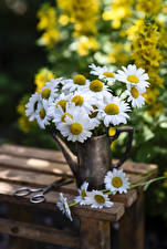 Картинка Ромашка Ваза Боке Цветы