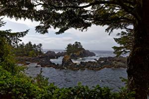 Картинка Канада Побережье Океан Скала Дерево Ucluelet, British Columbia