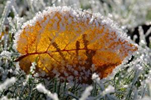 Фото Вблизи Макро Листья Иней Траве Природа