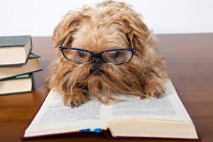 Обои для рабочего стола Собаки Книга Шпиц Очков животное