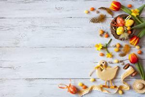 Картинка Пасха Тюльпан Шаблон поздравительной открытки Яйцо Доски Гнезда цветок