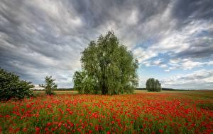 Картинка Поля Лето Мак Дерево Облачно Природа