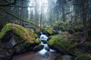 Фотографии Лес Водопады Камень Мха Ручей Природа