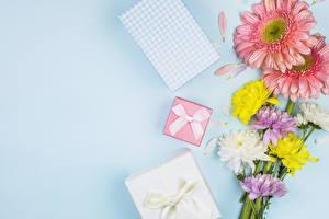 Картинка Герберы Хризантемы Цветной фон Подарок Бант Шаблон поздравительной открытки
