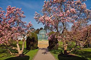 Фотографии Германия Сады Весна Цветущие деревья Zoological Botanical Gardens Stuttgart