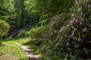 Обои Германия Рододендрон Парк Кусты Тропинка Скамейка Wiesenburg Castle Park