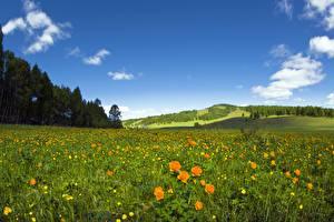 Фотографии Луга Лес Небо Лютик Трава Природа
