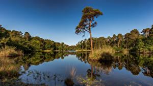 Обои для рабочего стола Нидерланды Лес Озеро Небо Деревьев Отражается Oisterwijk, North Brabant Природа