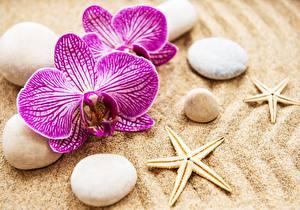 Фото Орхидея Камень Морские звезды Песка Цветы