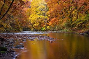 Фотографии Речка Камень Осенние Пейзаж Дерево Природа