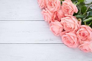 Обои Розы Букеты Розовый Доски Шаблон поздравительной открытки Цветы картинки