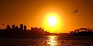 Фотография Рассвет и закат Австралия Птицы Чайки Сидней Солнца Силуэт город