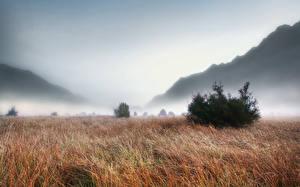 Обои Рассветы и закаты Горы Луга Тумане Трава Природа