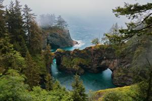 Фото Америка Побережье Утес Дерева Тумана Природа